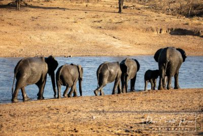 Elephant Family, Kruger National Park, South Africa  - by Diann Corbett Johnson